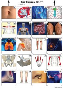 Human Body Picture Quiz - PR2040