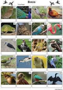 Birds Picture Quiz - PR2226