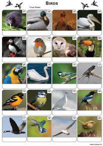 Birds Picture Quiz - PR2227